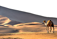 Dubaji sivatag