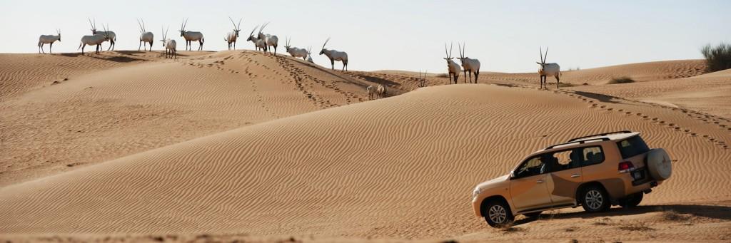 diubaj sivatagi rezervátum