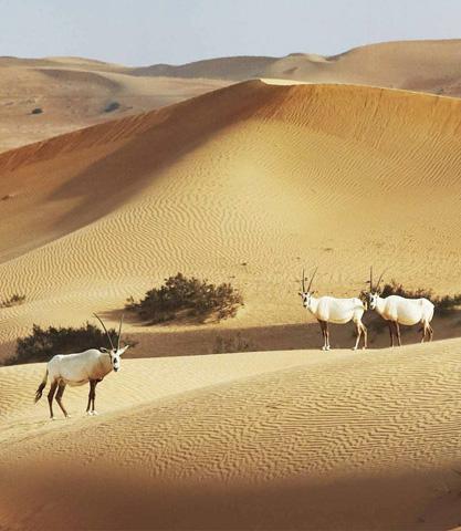 dubaj sivatag